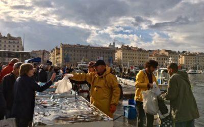 Marché aux poissons du Vieux-Port de Marseille : un rendez-vous pittoresque incontournable
