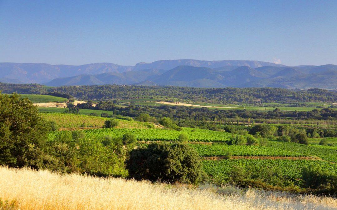 Vins IGP sud de France