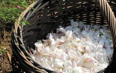 Se laisser guider par les parfums de Grasse