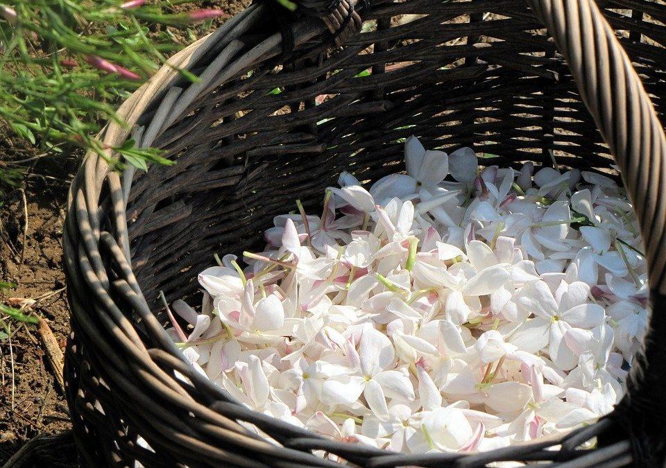 fleurs Grasse