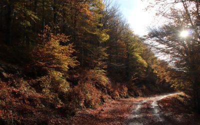 Sur les chemins du dépaysement : randonnées dans le massif des Albères