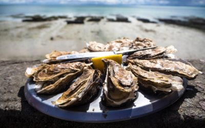 Parcs à huîtres de Leucate : un savoir-faire iodé