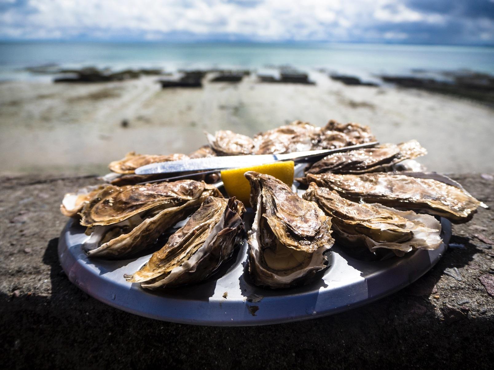 huîtres leucate