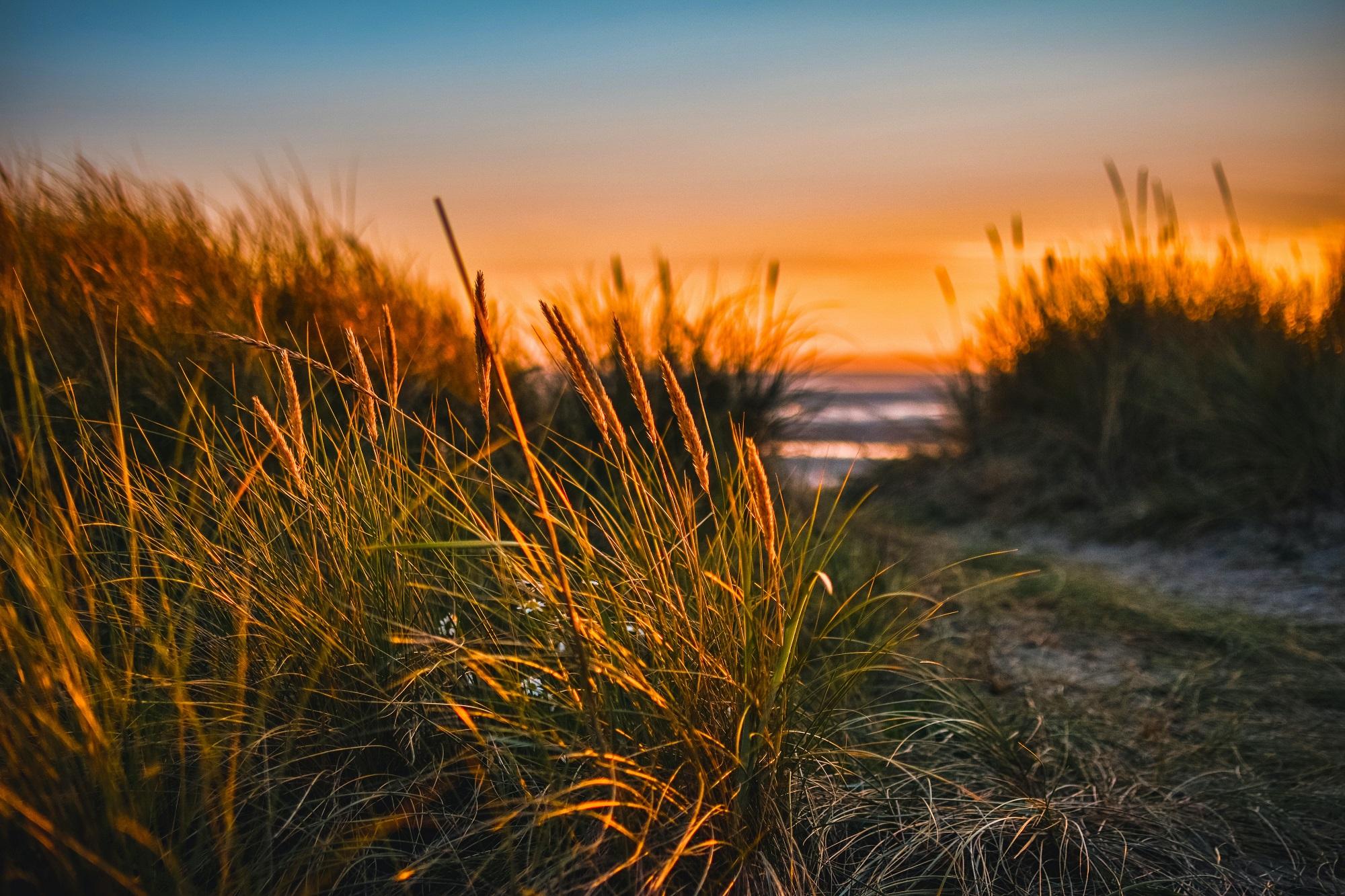 plage Espiguette site naturel