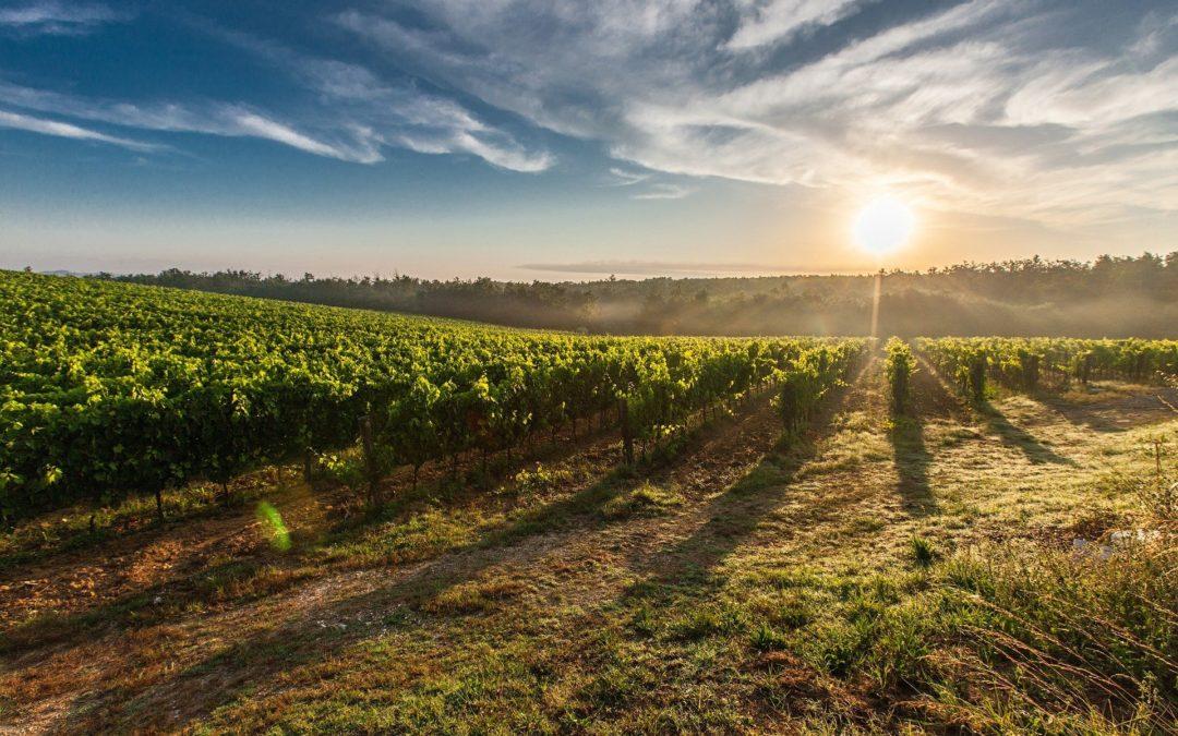 Roquebrun : Au cœur des vignes en trottinette électrique